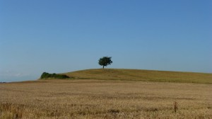 lonely_tree_1